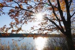 November telt uitzonderlijk veel zonuren en breekt waarschijnlijk een record