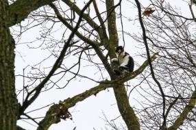 Het waait te hard: brandweer kan niet bij kat in boom